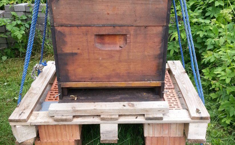 Bienenumzug in Holzbeute